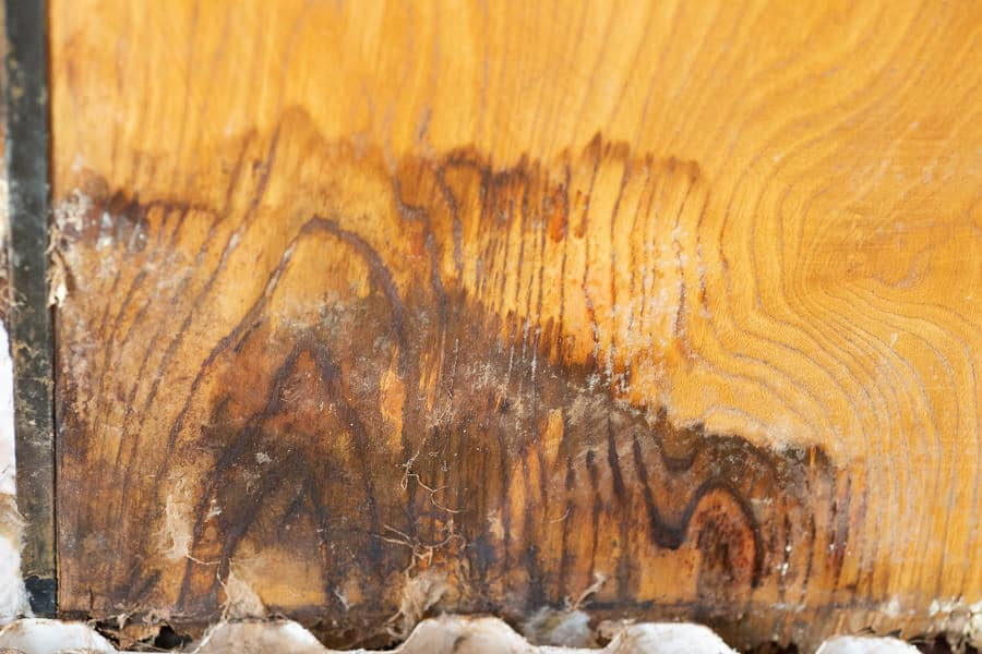 Black mould commonly found in many damp New Zealand homes.